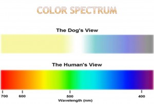 Diagram of a dogs eye color spectrum find wiring diagram dog vision do they only see in black white animalsense rh animalsense com purebred dogs diagram dog heart diagram ccuart Choice Image