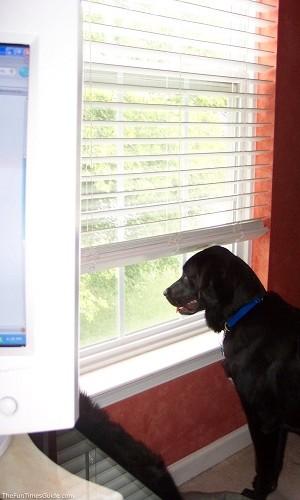 Managing Barking Animalsense