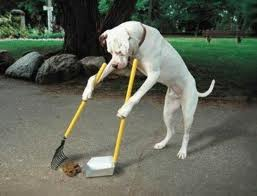 Dog Sweep