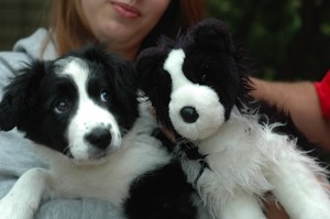 Fayette with stuffed border collie